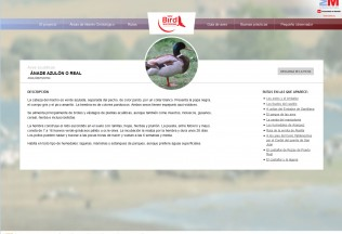 Ficha de ave de la web Madrid Birdwatching.